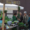 Niedersächsisches Gartenfestival 6