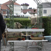 Niedersächsisches Gartenfestival 4