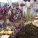 Garten&Ambiente LebensArt Bad Salzuflen