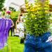 Petite Fleur - der besondere Gartenmarkt Hockenheim 2015 3