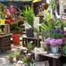 Blumen- und Gartenmarkt Herten  7