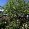 Tölzer Rosen- und Gartentage 8