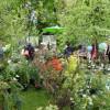 Tölzer Rosen- und Gartentage 5