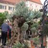 DiGA - Die Gartenmesse Ulm-Wiblingen 1