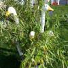 Kunst und Garten Hinterzarten 2
