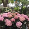 Garten & Ambiente Nordenham 7