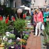 Blumen- und Gartenmarkt Essen Steele 2017 6