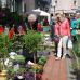 Blumen- und Pflanzenmarkt Essen Steele 2016 4