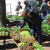 Blumen- und Gartenmarkt Essen Steele 2017 5