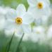 Gartenmarkt Späth'er Frühling 8