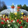 Du und dein Garten: Spezialmarkt 3