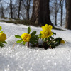 Schätze unterm Schnee - Raritätenbörse 2017 2