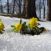 Schätze unterm Schnee - Raritätenbörse 1