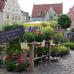 Fuchsien und Kräutermarkt Wemding 4