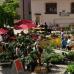 Fuchsien und Kräutermarkt Wemding 1