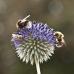 Let's Bee, das Garten von Ehren- Sommerfest 1
