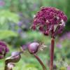 Let's Bee, das Garten von Ehren- Sommerfest 2