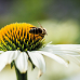 Let's Bee, das Garten von Ehren- Sommerfest 5