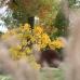 Apfeltage Garten von Ehren 1