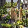 Herbstlicher Pflanzenmarkt im Hessenpark 5