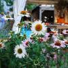 Herbstlicher Pflanzenmarkt im Hessenpark 3