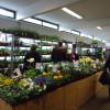 Gartenfreuden Ludwigshafen 5