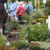 Herbstlicher Pflanzenmarkt Marburg 1