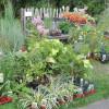 Herbstlicher Pflanzenmarkt Marburg 2