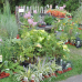 Pflanzenmarkt Marburg 1