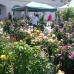 Verschoben auf 2021 - 10. DiGA Gartenmesse Aldersbach 8