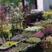 Gartentage Lindau 8