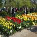 Ippenburger Frühlingsfestival 8