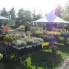 Bregenzer Gartenkultur 3