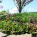 GardenLife 4