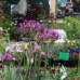23. Freisinger Gartentage 7