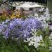 23. Freisinger Gartentage 1