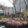 Northeimer Frühlingserwachen - Haus & Gartentrends 1