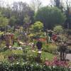 Frühlings-Gartenmarkt 4