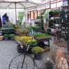 Northeimer Frühlingserwachen - Haus & Gartentrends 8