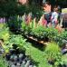 Gartenträume Traustadt 9