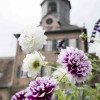 Das Fürstliche Gartenfest Schloss Wolfsgarten 7
