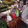 salon jardin 2016 - Der Wiener Gartensalon