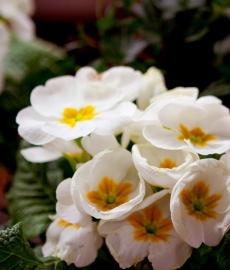 Veranstaltung: Garten Frühling Lebensart Gießen