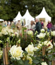 Findet statt: Gartenfestival Herrenhausen