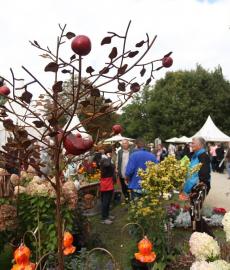 1. Herbstzauber Rastatt