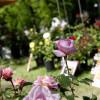 Frühling Blumen Freizeit