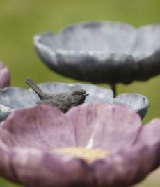 8. Kurpfälzische Orchideenschau