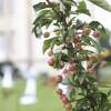 10. Buckower Gartentag
