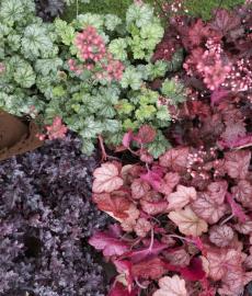 Pflanzentauschmarkt BUND-Garten