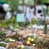 Gartenflohmarkt Gut Wahnbek